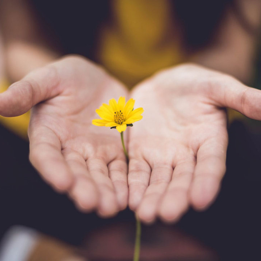 flower and hands - When the Obvious is Not So Easy