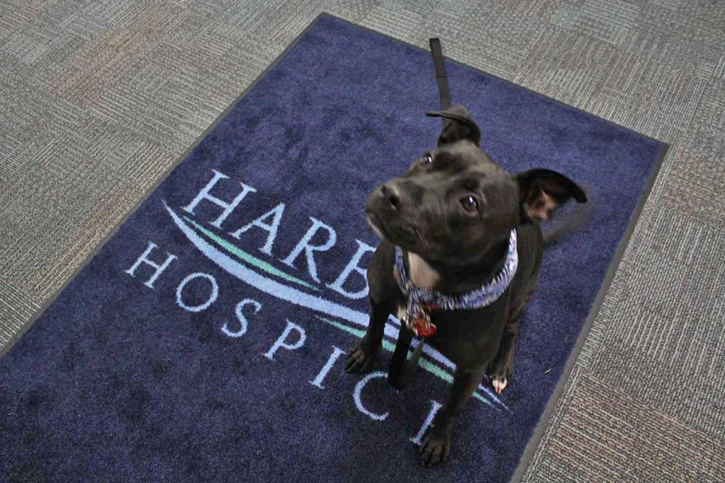 Welcome to Ivy, our new Hospice Therapy Dog!