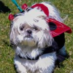2019 Pooches People Picnic 22 150x150 - 4th Annual Pooches & People Picnic